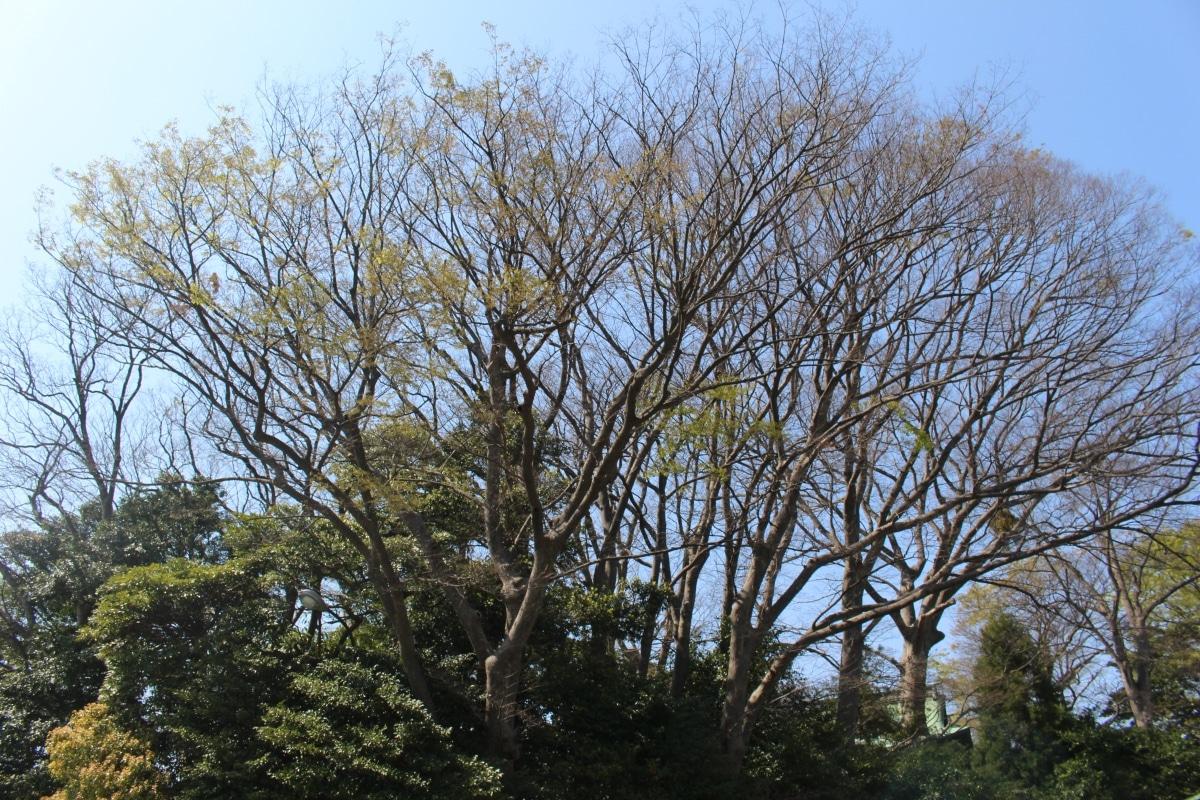 20170414_Yugyoji_Fujisawa_04