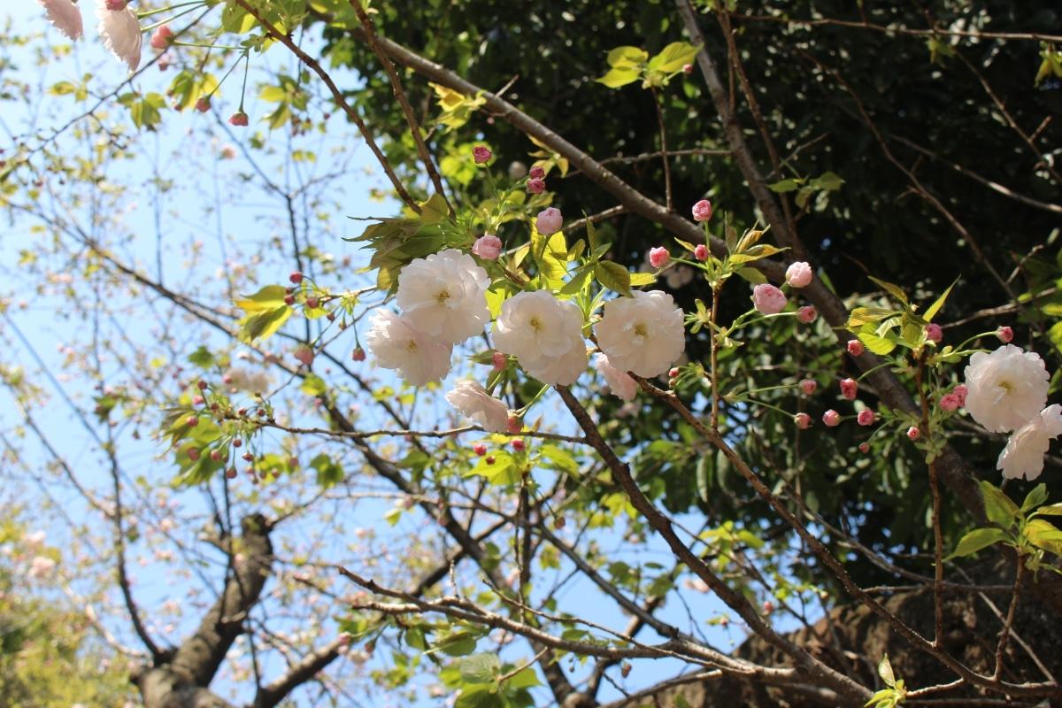 20170414_Yugyoji_Fujisawa_14
