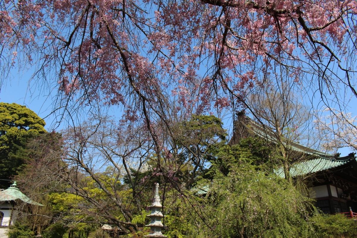 20170414_Yugyoji_Fujisawa_34