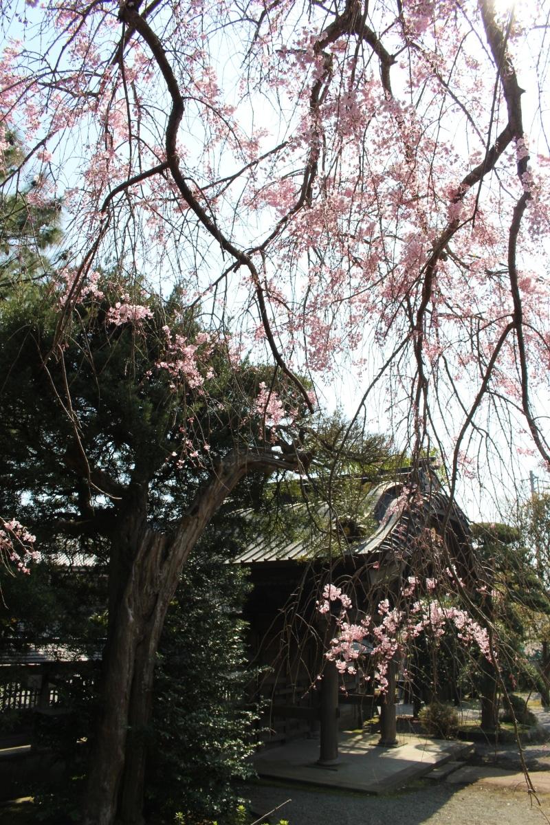 20170414_Yugyoji_Fujisawa_44