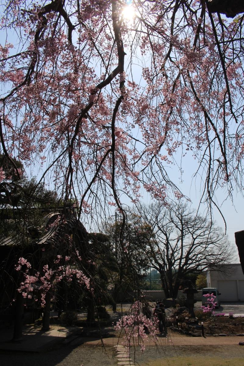 20170414_Yugyoji_Fujisawa_45